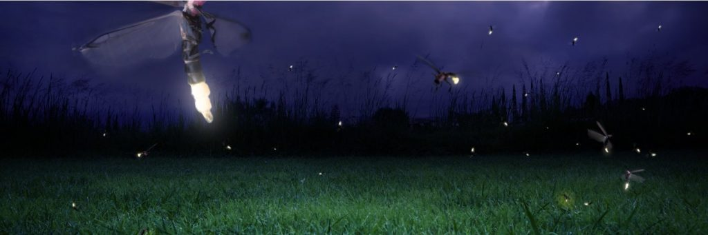 Fireflies in the grass on a dark night