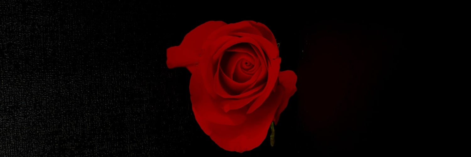 Close up of red rose on a black background.