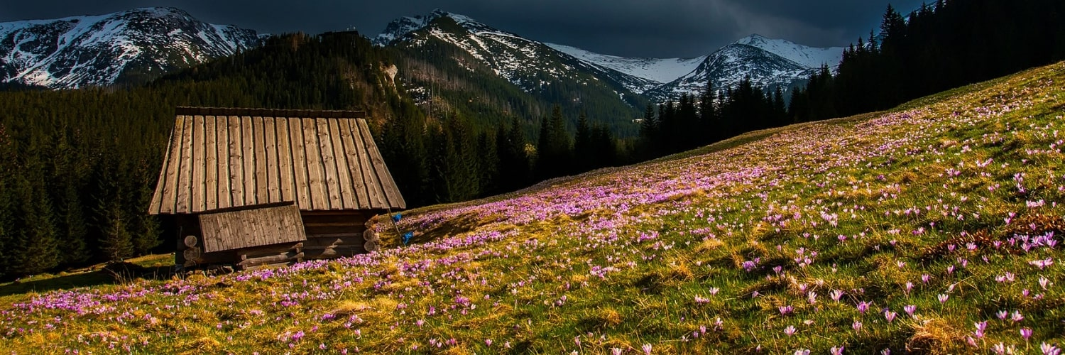 Wooden cabin in front of snow topped mountains surrounded by purple spring flowers in the grass.