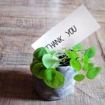 "Small plant in pot with card that says ""Thank You"" on wooden bench."