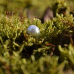 Pearl on a bed of moss