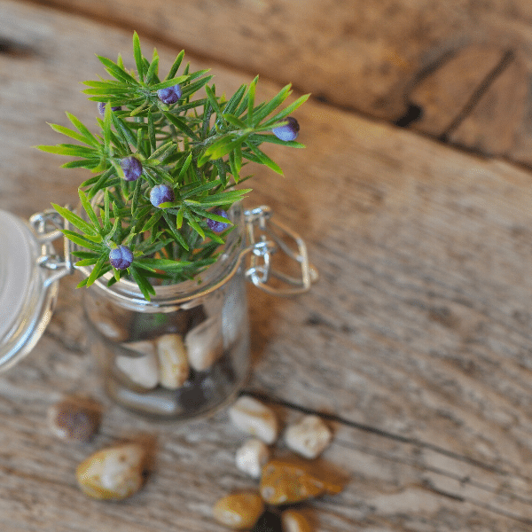 A glass jar with a hinged lid on a wooden surface. There are smooth river pebbles in the jar and a sprig of plant.