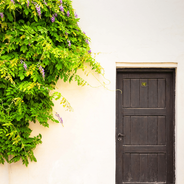 A wooden door with the number 43. There is a wisteria vine growing, it looks like its flowing down from above the door.