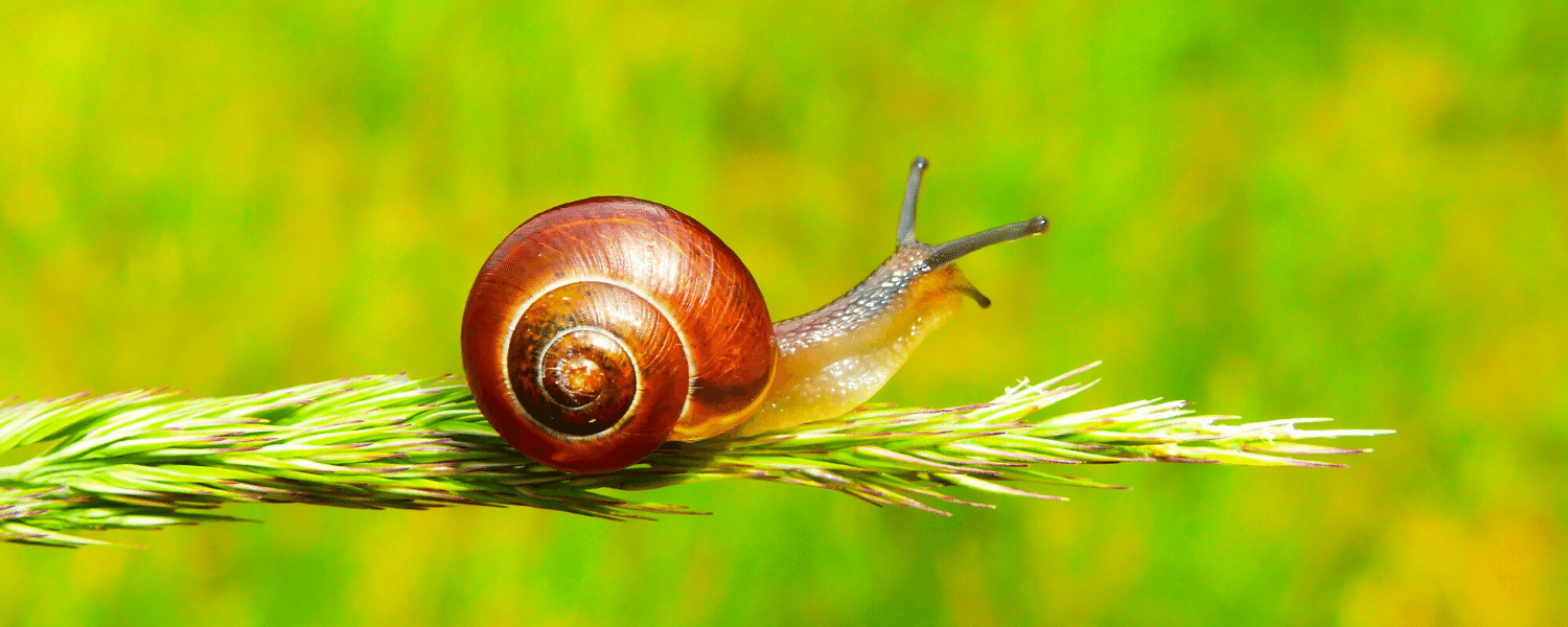 Selective focus of snail on plant
