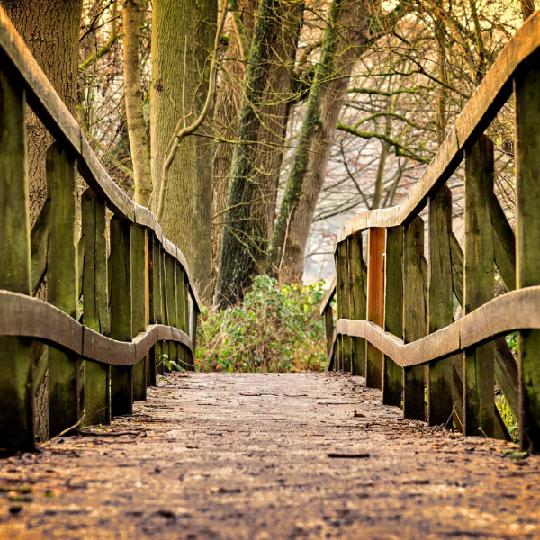 A sturdy aged wooden bridge in a forest, the bridge is mossy and there are autumn leaves on the ground.