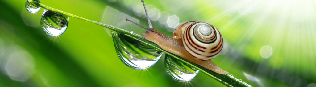 A close up image of a snail climbing a blade of grass with small drops of water.