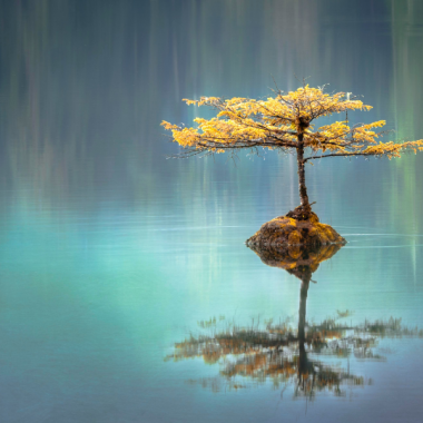 A tree on a tiny island in a large lake, tree is reflecting on the water.